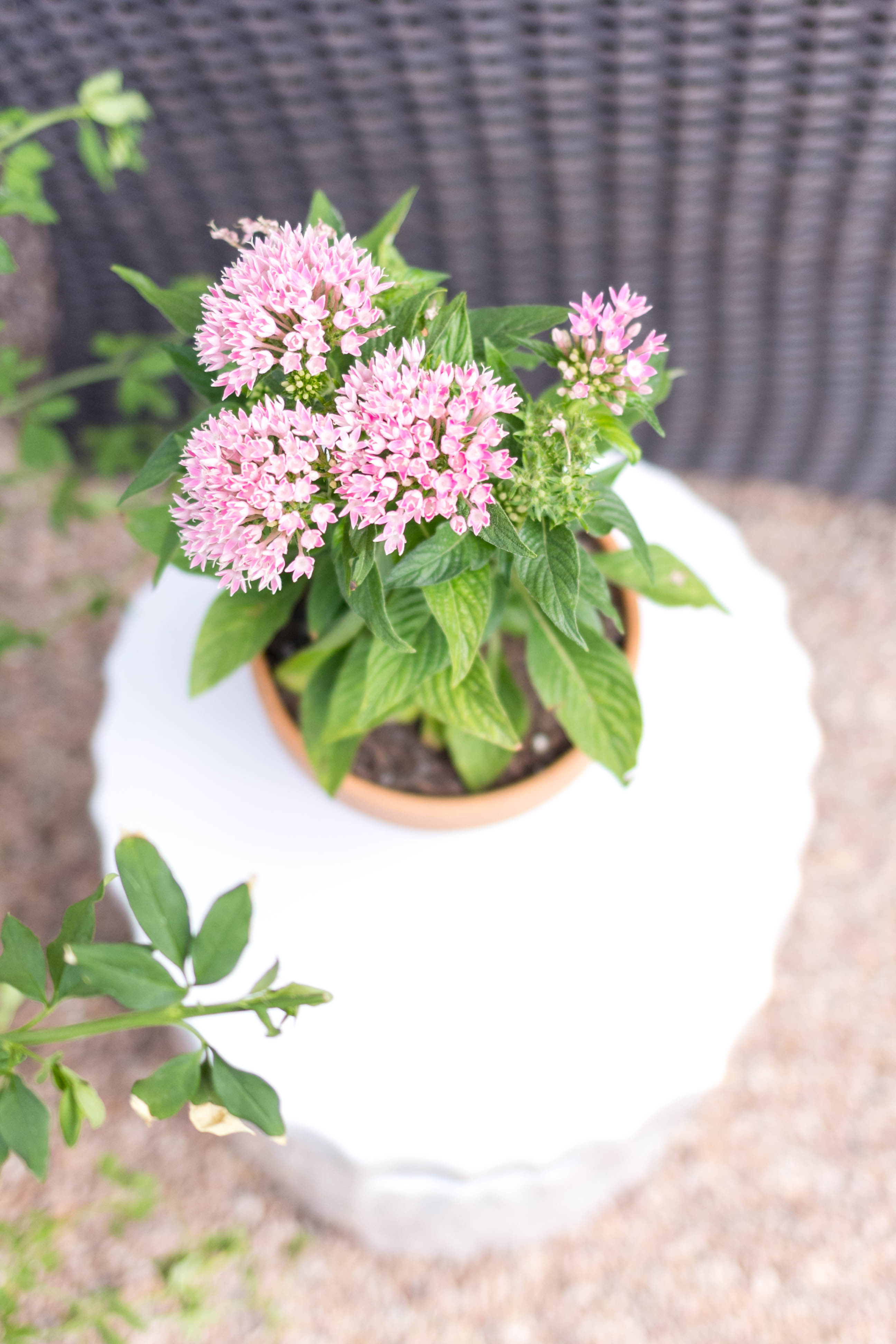 Decorating with Plants Outdoor Patio